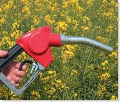 a fin de petroleo granos