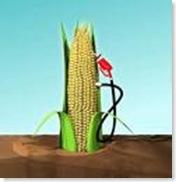 a fin de petroleo maiz