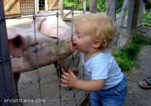 El culpable de la fiebre porcina.  de: www.encontrarse.com/notas/pvernota.php3?nnota=27323