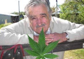 Uruguay_Marihuana